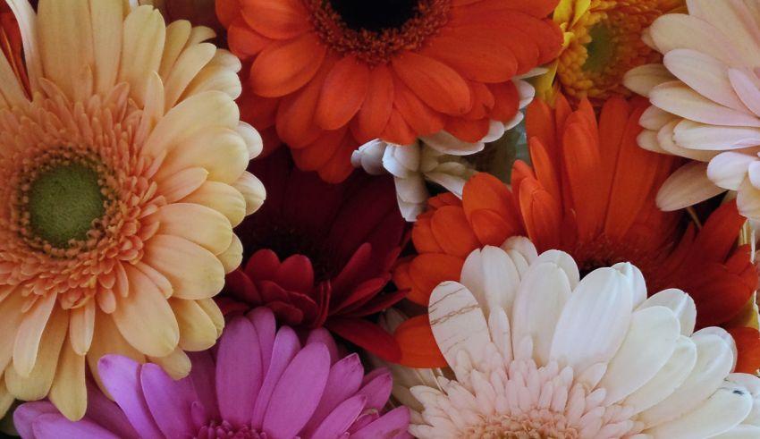 Greetz: bloemen en planten